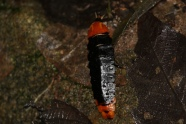 Odd Bug