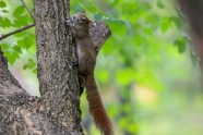 A local squirrel