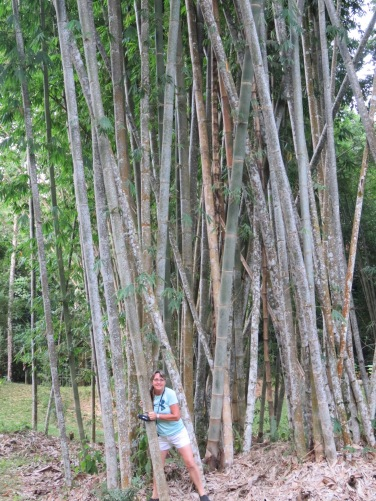 Massive Bamboo