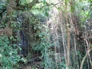 Part of the 3 km Jungle Trek