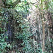 Part of the 3 km Jungle Trek