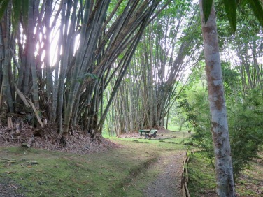 Large Bamboo Gardens