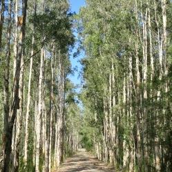 Paperback Forrest, Bongil Bongil National Park