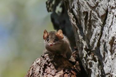 A cute native rodent