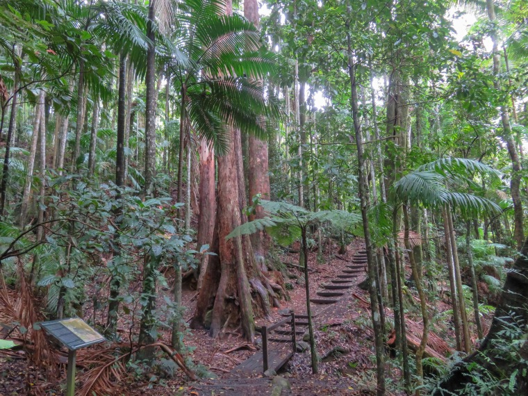 lyrebird trail, Mt. Warning