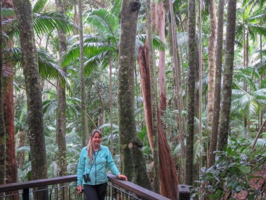 Lyrebird Trail, Mt Warning