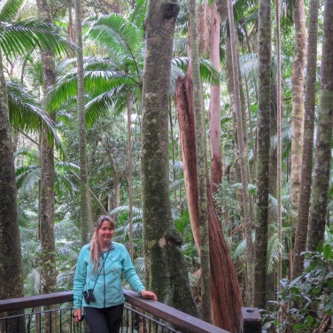 Lyrebird Trail, Mt Warning