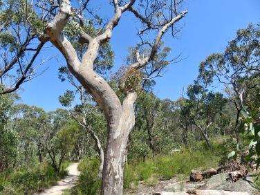 Girraween National Park, Queensland
