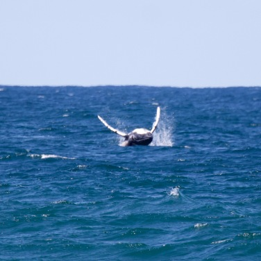 Can't get enough of Whale watching this holiday