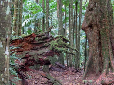 Picturesque Mount Warning trail