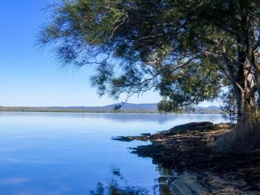 Lake Cootharaba foreshore