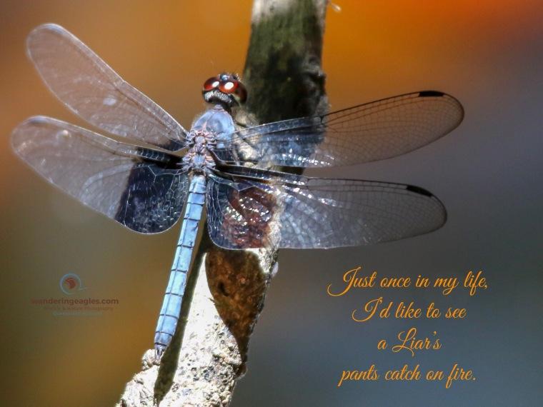 Tree Hugger Dragonfly